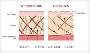 Collagen in aging skin